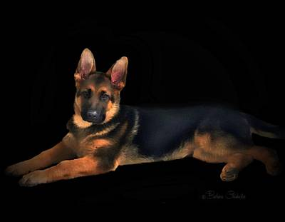 Mixed Media - Portrait Of Young German Shepherd by Barbara Chichester