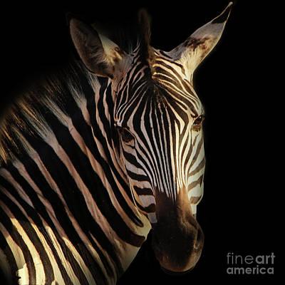 Photograph - Portrait Of Zebra by Barbara Dudzinska