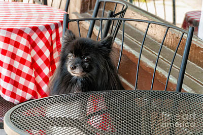 Photograph - Portrait-waiting For Lunch 2 by Kathleen K Parker