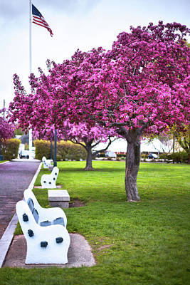 Prescott Park Photograph - Portsmouth Bench And Tree by Eric Gendron