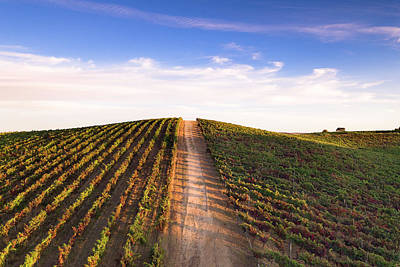 Photograph - Portugal Vineyards 03 by Edgar Laureano