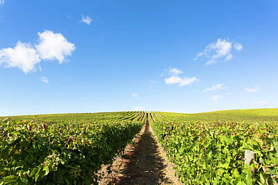 Photograph - Portugal Vineyards by Edgar Laureano