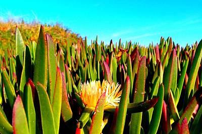 Photograph - Portuguese Coastal Plants  by Dora Hathazi Mendes