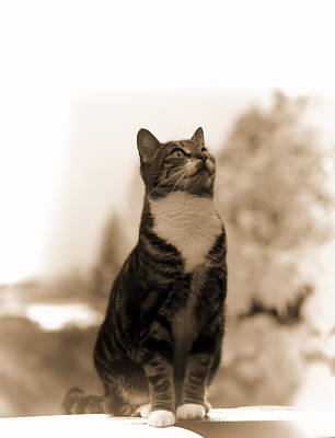 Mixed Media - Posing Cat by Pamela Walton