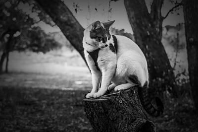 Photograph - Posing Kitty by Leticia Latocki
