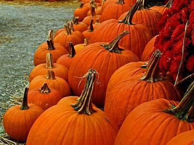 Photograph - Posing Pumpkins by Michiale Schneider