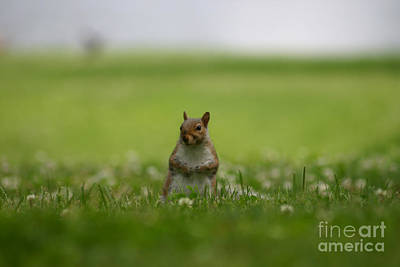 Posing Squirrel Art Print by David Bishop
