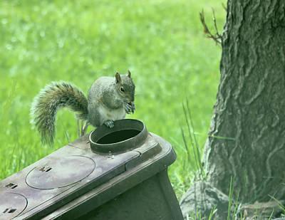 Photograph - Posing Squirrel by Myrna Migala