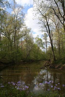 Photograph - Post Creek Spring by Dylan Punke