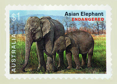 Photograph - Postage Stamp - Asian Elephant By Kaye Menner by Kaye Menner