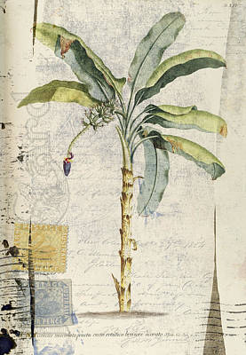 Photograph - Postcard Banana Plant Botanical by Carol Leigh