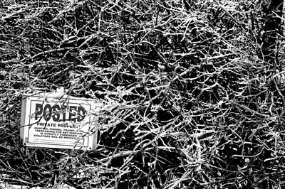 Ice On Branch Photograph - Posted Ice by Emily Stauring