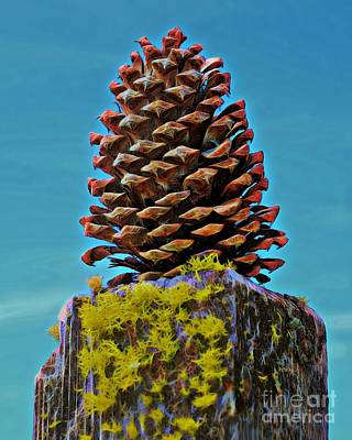 Photograph - Posted Pinecone by Patrick Witz