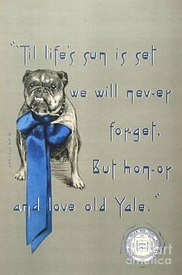 Bulldog Drawing - Poster - Yale Bulldog by Pg Reproductions