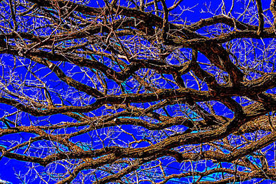 Photograph - Posterized Tree Branches by Lonnie Paulson