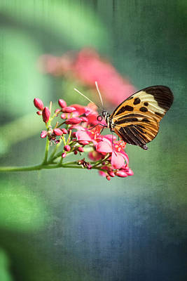 Photograph - Postman Butterfly In Dawn's Light  by Saija Lehtonen