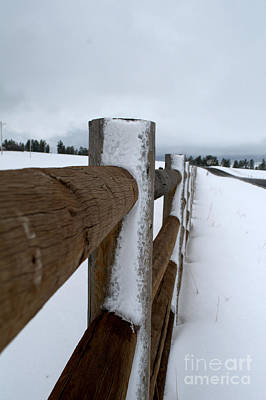 Photograph - Posts In The Snow by Anjanette Douglas