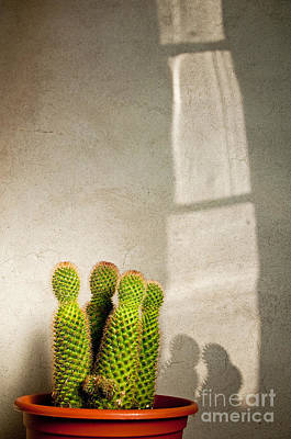 Pot Of Cactus Art Print by Emilio Lovisa