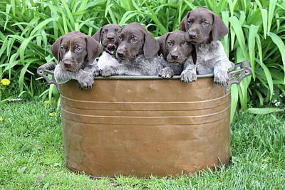 Photograph - Pot Of Pointers by Brook Burling