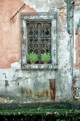 Photograph - Pot Plant Window by Christopher Rees