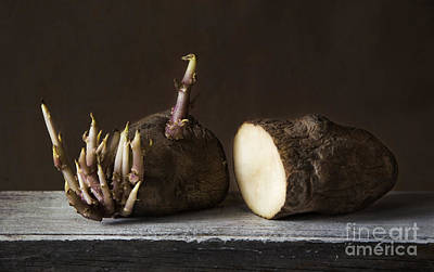 Photograph - Potato by Elena Nosyreva