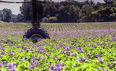 Wall Art - Photograph - Potato Field by J Thomas