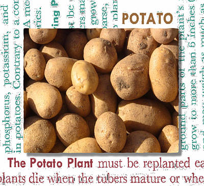 Potato Mixed Media - Potato Montage by Gary Henderson