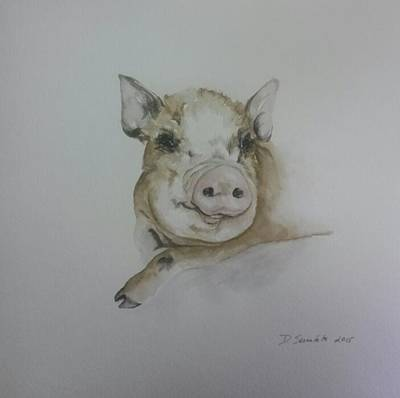 Potbelly Pig Painting - Potbelly Piglet by Dianne Shoenfelt