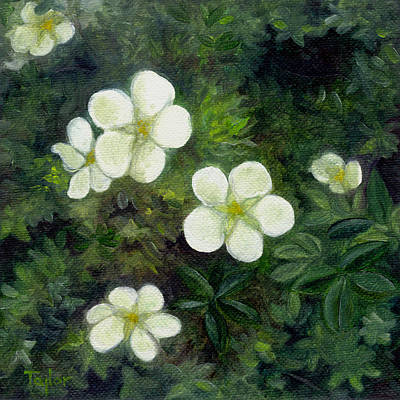 Painting - Potentilla by FT McKinstry