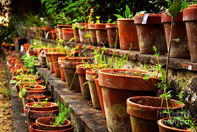 Photograph - Pots In The Botanical Garden Of Pisa, Italy by Tanya Searcy