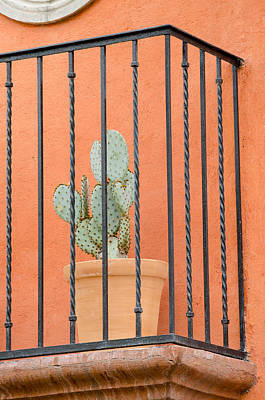 Photograph - Potted Cactus On A Balcony. by Rob Huntley