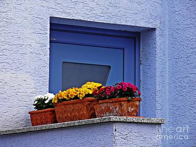 Photograph - Potted Mums by Sarah Loft