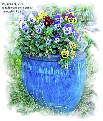 Photograph - Potted Pansies Haiku by Constantine Gregory
