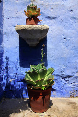 Photograph - Potted Plants Against A Blue Painted Wall  by Aidan Moran
