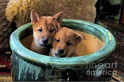Photograph - Potted Puppies by Expressionistart studio Priscilla Batzell