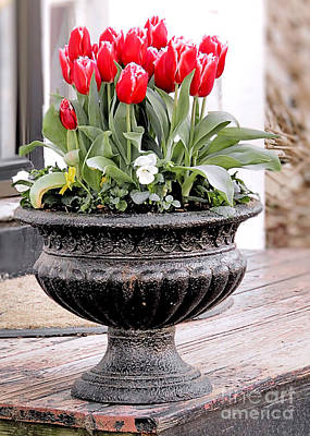 Photograph - Potted Tulips by Janice Drew