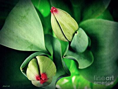 Photograph - Potted Tulips Still Life   by Sarah Loft