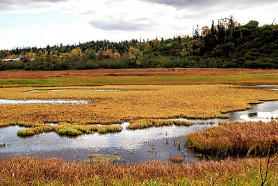 Photograph - Potters Marsh In Autumn by Phyllis Taylor