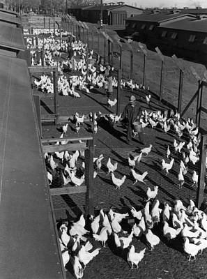 Anti Immigrant Photograph - Poultry Farm, 1943 by Granger