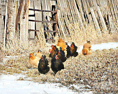 Photograph - Poultry Parade by Kathy M Krause