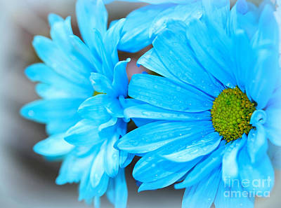 Photograph - Powder Blue by Patti Whitten