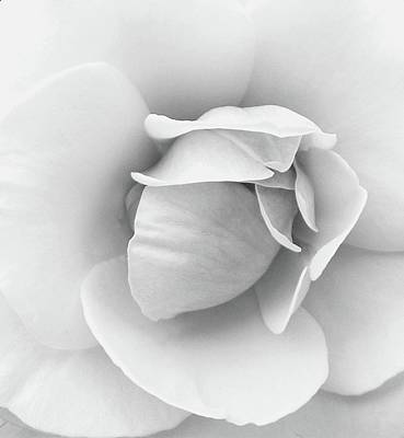 Photograph - Powder Puff Black N White by Florene Welebny