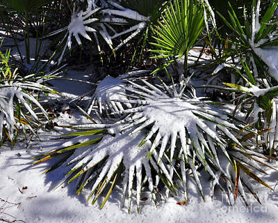 Photograph - Powdered Palms by Al Powell Photography USA