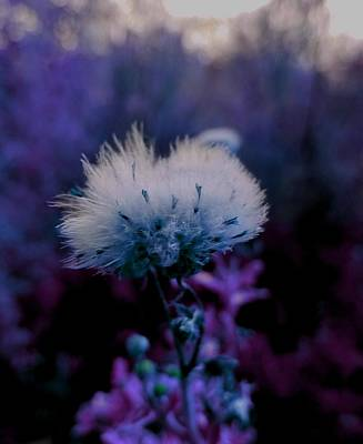 Digital Art - Powdery Purple Puff Flower By Lisa Kaiser by Lisa Kaiser