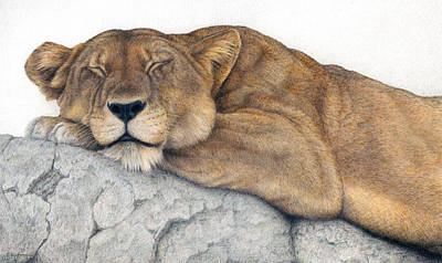 African Animals Drawing - Power And Grace At Rest by Pat Erickson