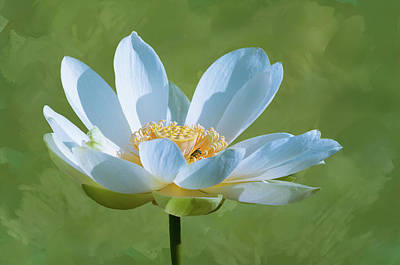 Photograph - Power Of A Lotus by Carolyn Dalessandro
