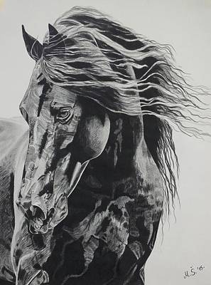 Drawing - Power Of Horse by Melita Safran