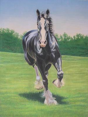 Clydesdale Drawing - Power Trot by Carrie L Lewis