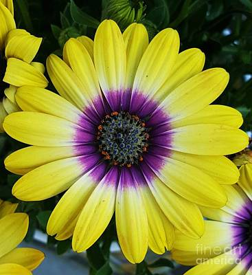 Photograph - Powerful Flower by Jasna Gopic