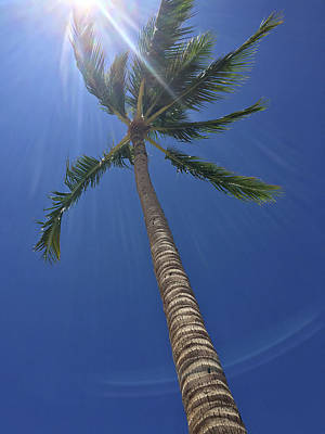 Photograph - Powerful Palm by Karen Nicholson